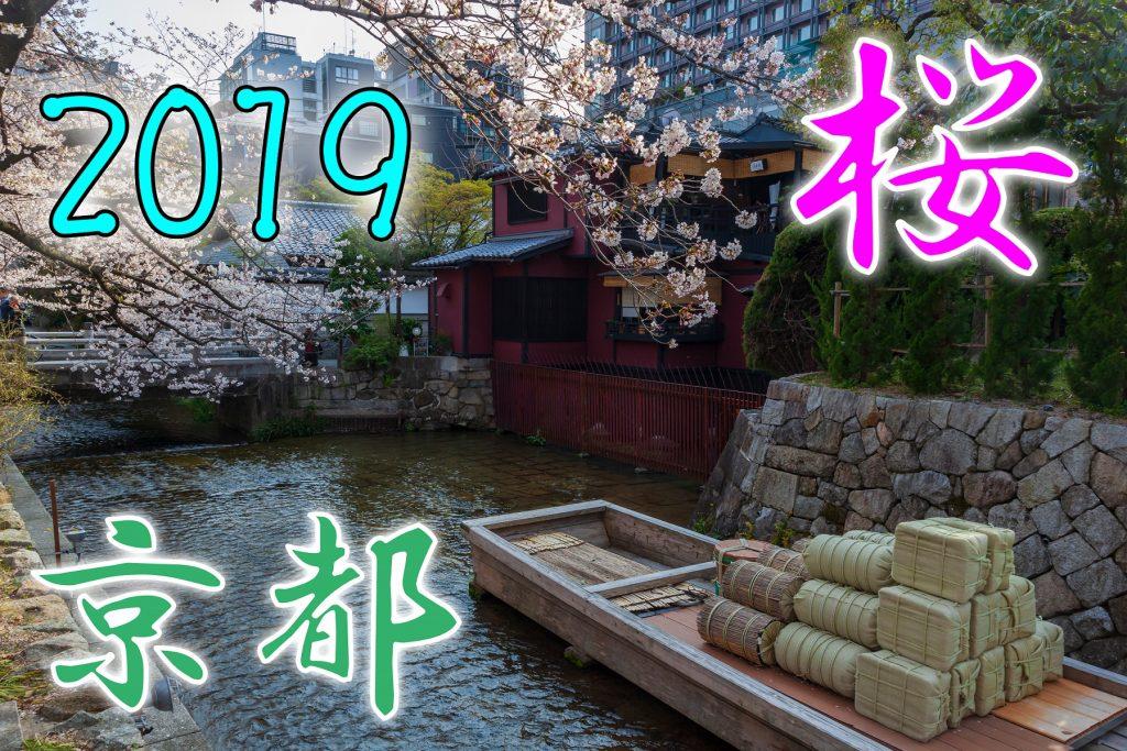 京都の桜を楽しむ(2019年4月6日)